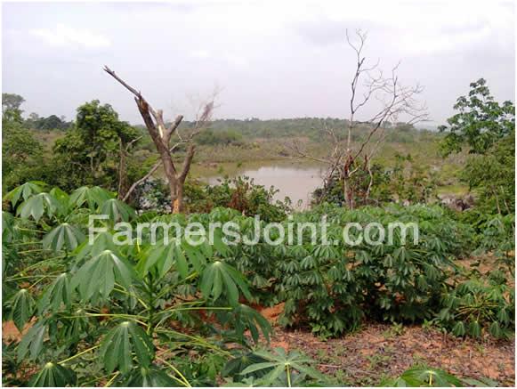 [Image: bitter-leaf-farm-river.jpg]